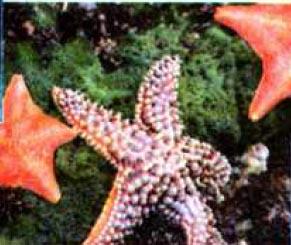 Животный Мир Тихого Океана Доклад