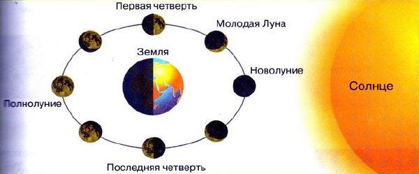Рис. 93. Фазы Луны