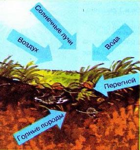 Реферат по географии почвы 6479
