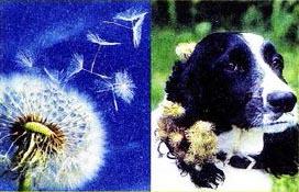 Наземно воздушная среда обитания организмов особенности  Рис 153 Приспособления семян для перемещения на значительные расстояния